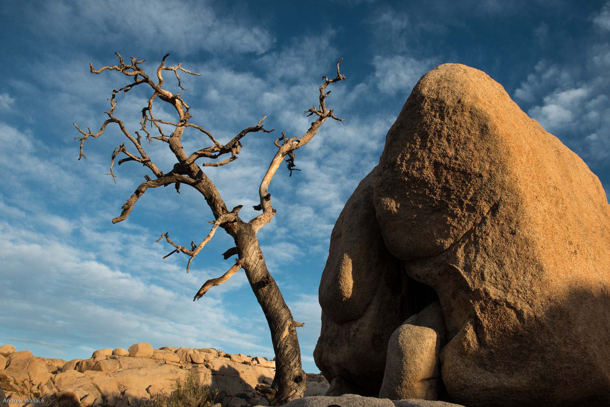 Landscape    Rock and Tree - Joshua Tree National Park   I have been developing a passion for landscape photography, during all hours of the day. Night photography and light painting in Joshua Tree National Park was particularly engrossing.