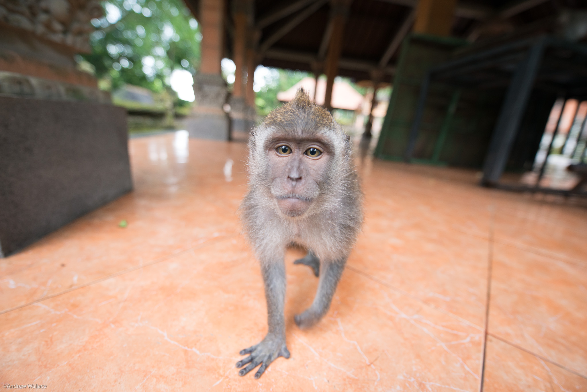 Travel    Balinese long-tailed monkey - Sacred Monkey Forest, Ubud, Bali    There is nothing like traveling to other countries to expand your mind, your viewpoint. I have been all over southeast Asia, and several times to Europe. Coming soon - Africa!