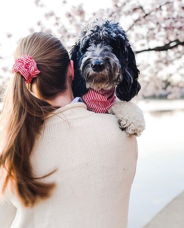 Nothing beats the bond between a mama + her pup! . . #bali #balidog #rescuedog #rescue #scrunchies #dogmum #dogmom #dogbandana #dogsofdc #dogsofnyc #dogsofinsta #dailywoof #dailybark #dogsofseattle #dogsoflondon #slpets #dogsofvancouver #dogsofsydney #dogsofmelbourne