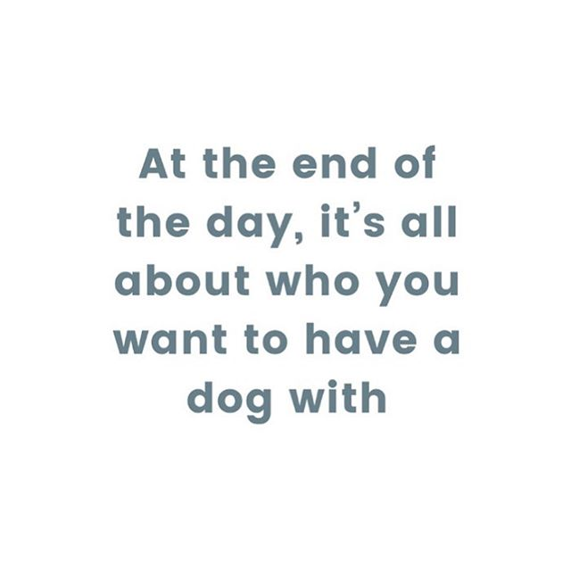 Let's be real - it's what we're all looking for! . . #bali #balidog #balipaws #dogquote #rescuedog #dogdad #dogmum #dogmom #dailywoof #dailybark #rescue #thedogist #mustlovedogs