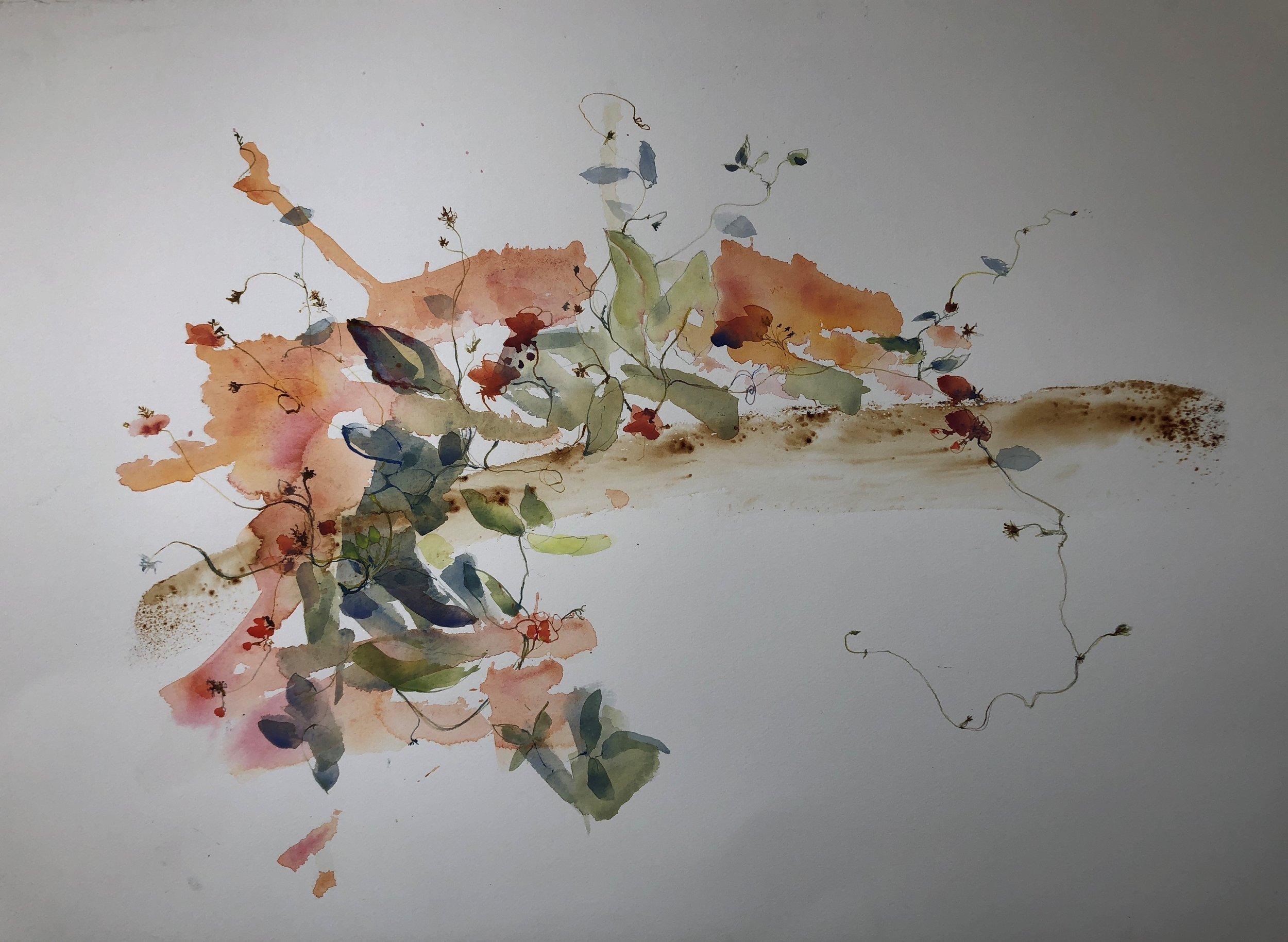 Mandy Ferreira_Kennedia Coccinea1_2018_watercolours pencil on paper_770x570cm..jpg