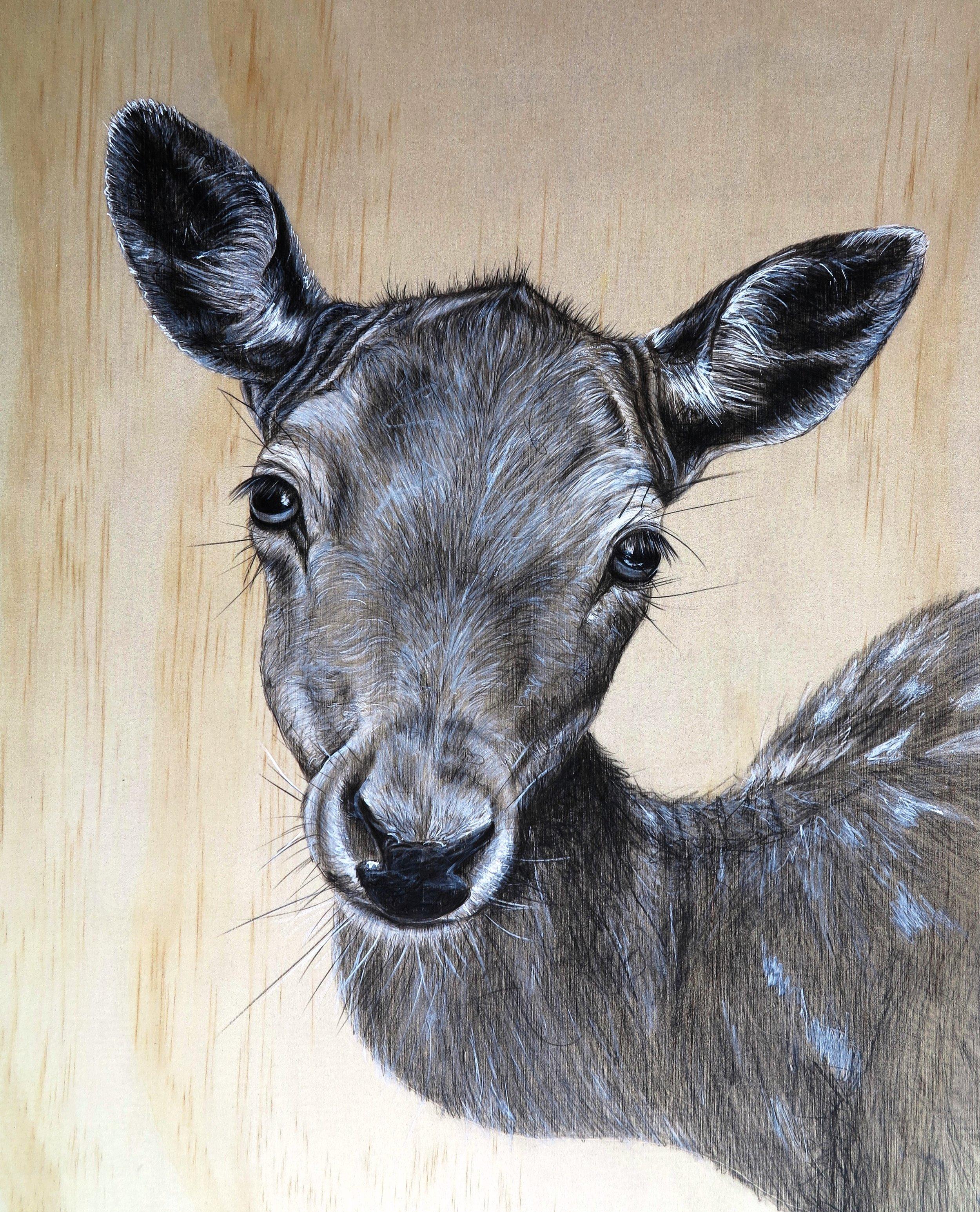 deer on ply.JPG