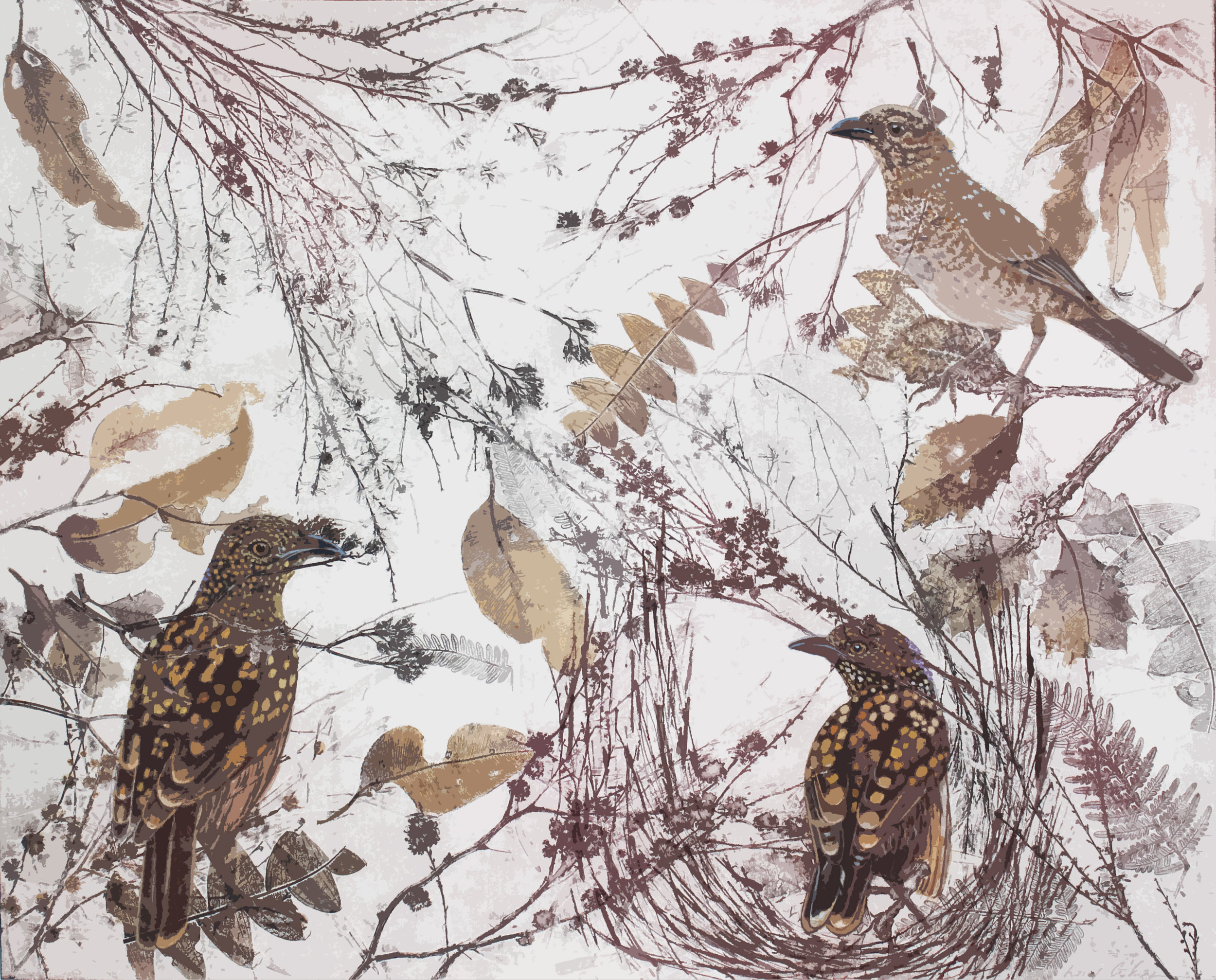 K.Gibson-Bowerbird Banter Soft - ground etching and acrylic on Hahnemule Paper 100cm x 80cm 2.jpg