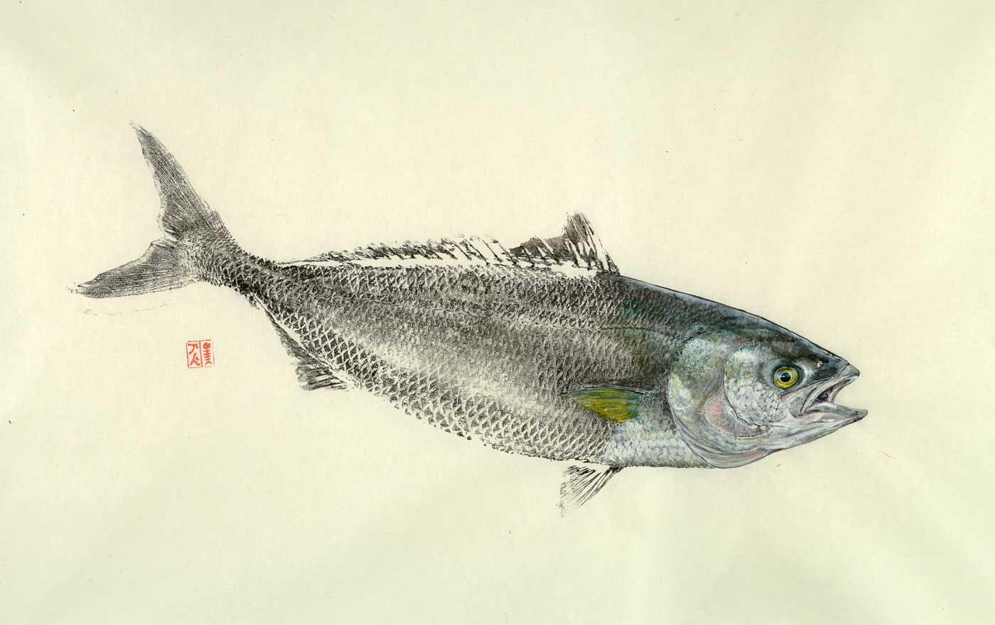 Adam-Ashdown-Australian-Salmon-2019-sumi-and-acrylic-on-kozo-90cm-x-65cm.jpg