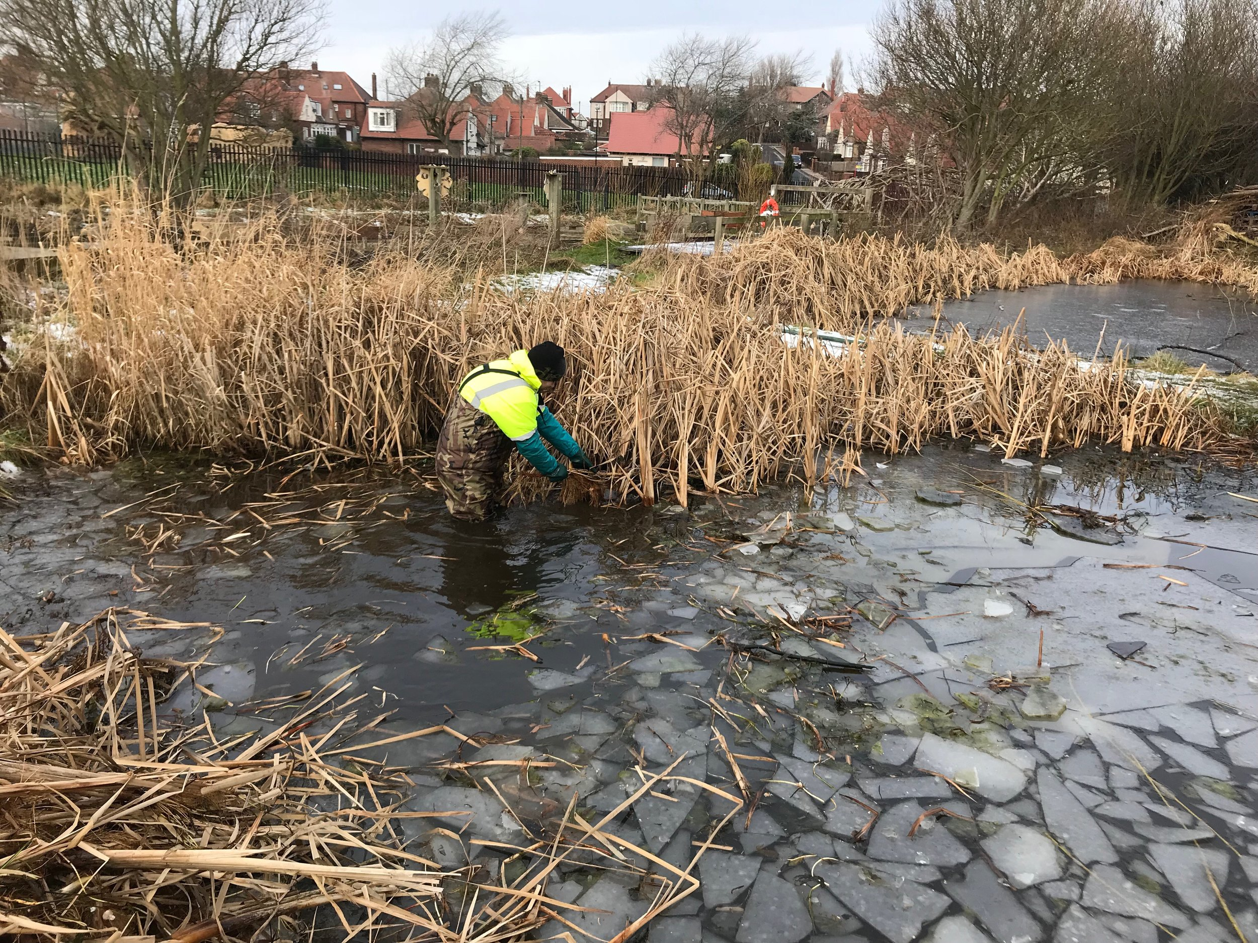 pond weed removal ice.jpeg