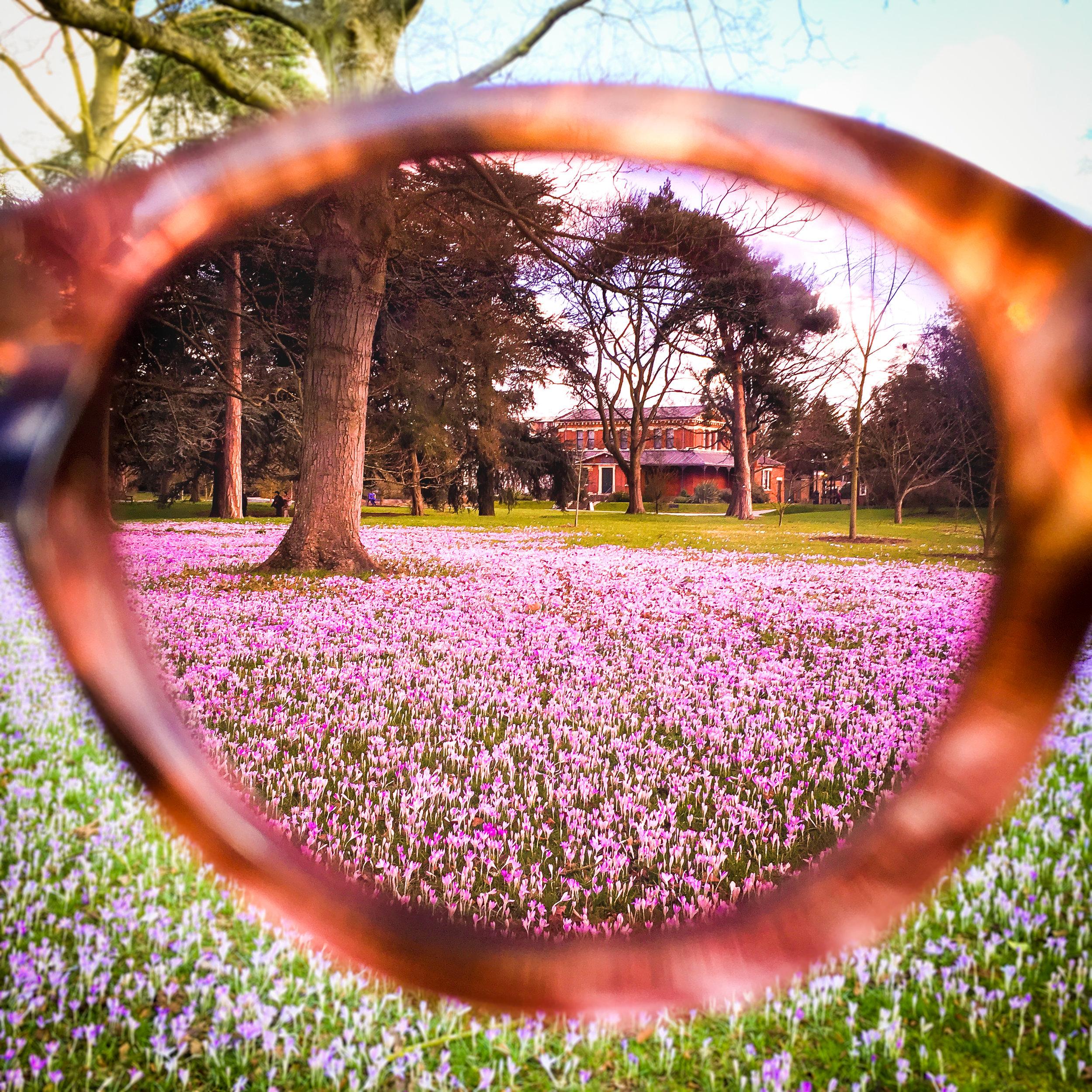 Through_The_Lens.jpg