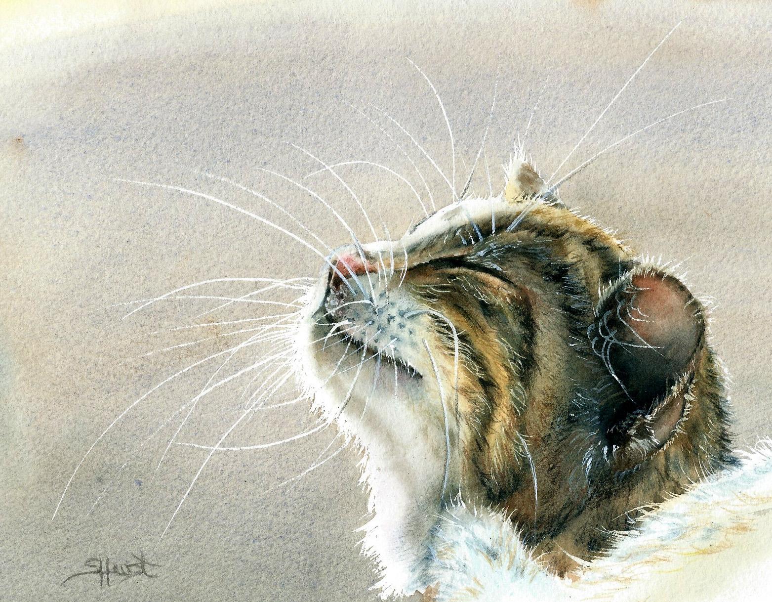 Sharon Hurst, Purring In The Sunshine, Watercolour and pencil, 15.63x12.18,  http://www.sharonhurst.co.uk/