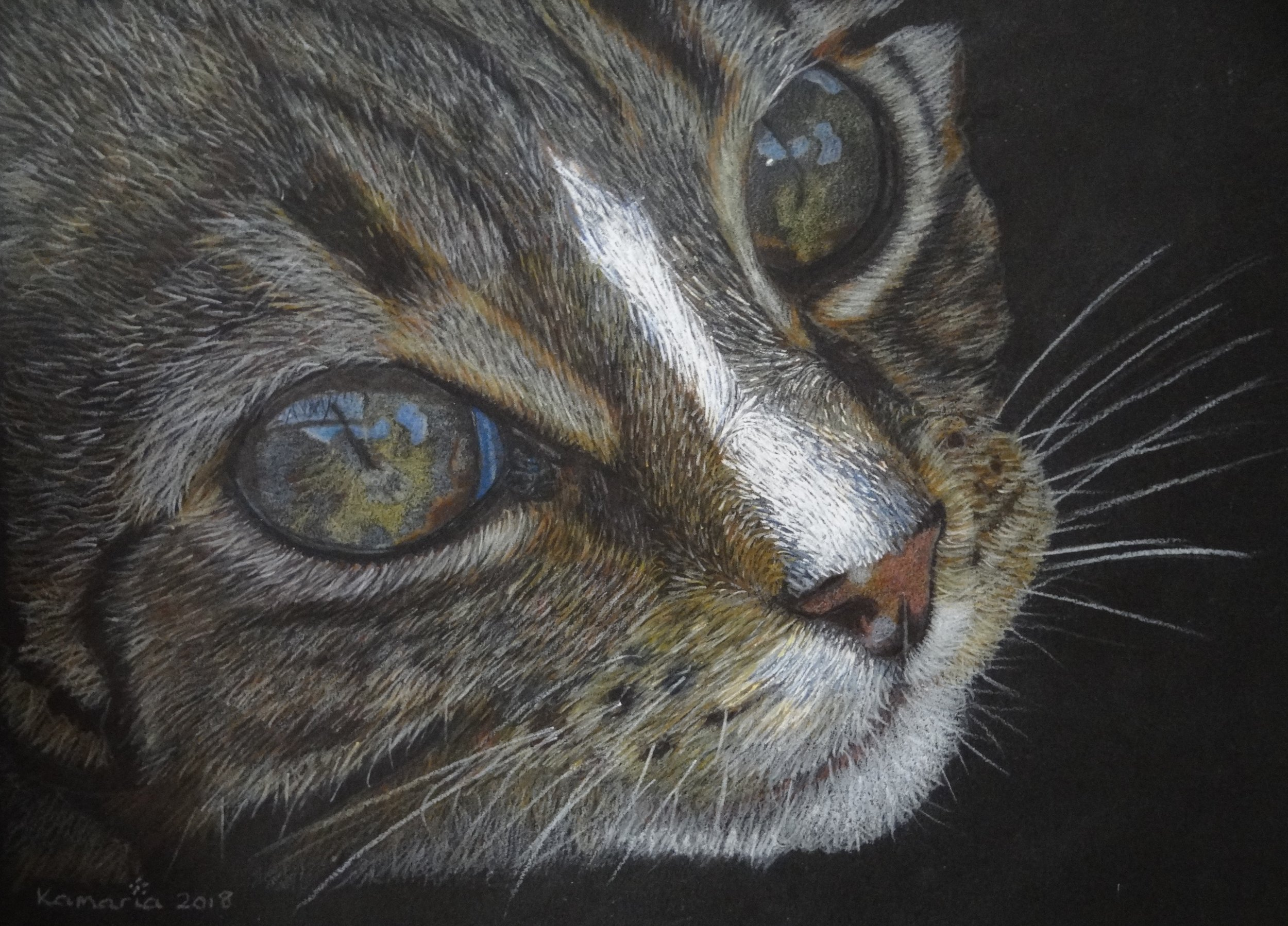 Karen Hunt, Karen Hunt - Cats Eyes, Pencil on paper, 23cm x 30cm