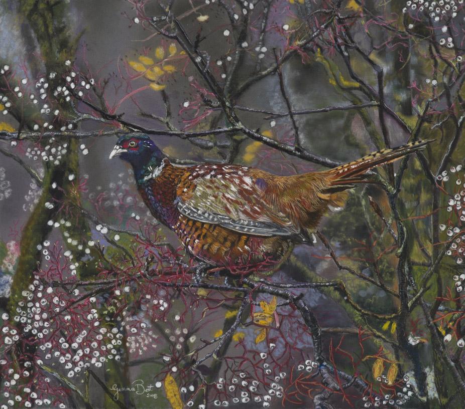 Gemma Best, pheasant in woods, unison pastel on clairefontaine pastel matt, 12x10,  http://www.gemmabestart.com