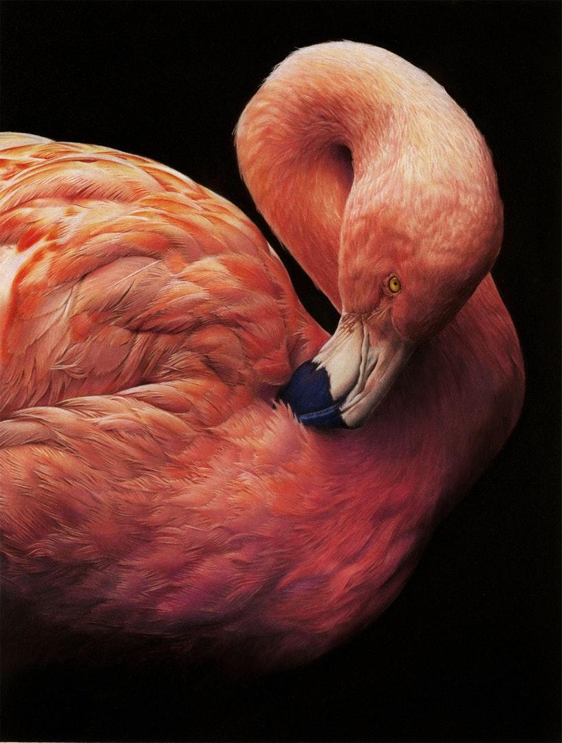 Pretty in Pink, Coloured Pencil on Fisher400 Paper, 44.5cm x 33,5cm x 0.2cm, Nicola Wilkinson