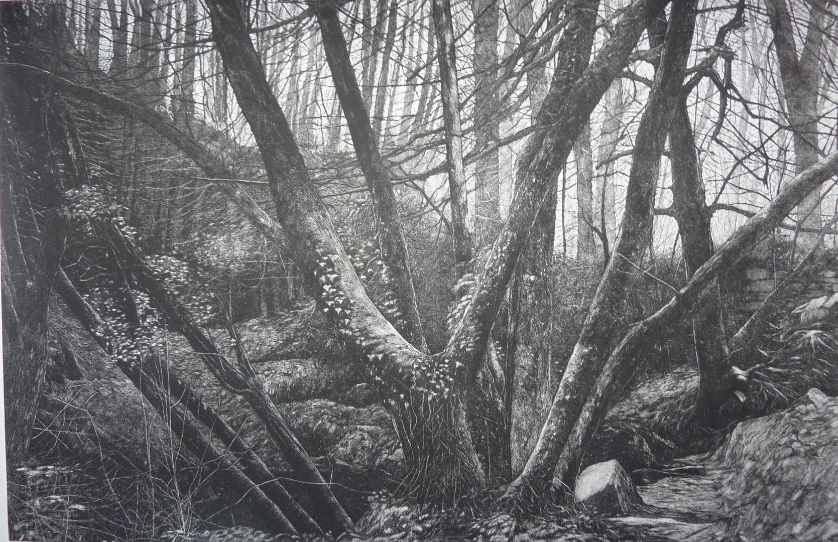 John Howard  Kennall Vale Cornwall Study 1  Etching and aquatint on paper, 60.5 x 31 x 0.05 cm