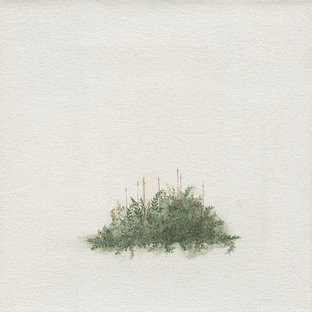 Louise Lacaille  Seven Sporophytes  Oil on canvas, 20.5 x 20.5 x 1.8 cm