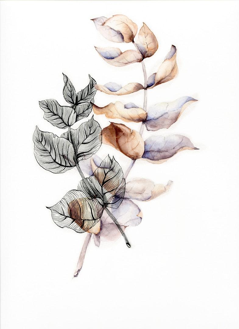 Natalia Medovnik  Eucalyptus essence  Watercolor, ink, 23 x 25 cm  http://instagram.com/i_doncake
