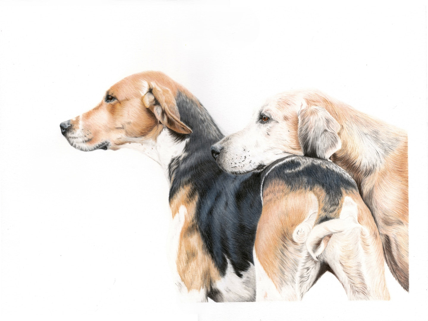 Victoria Randall  Got Your Back  Coloured pencils, 30 x 40 cm  http://www.victoriarandall-fineart.co.uk