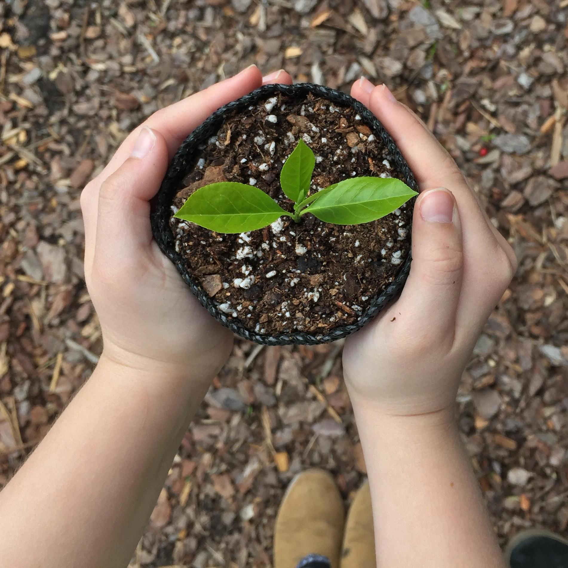 sweetrootsplants.jpg