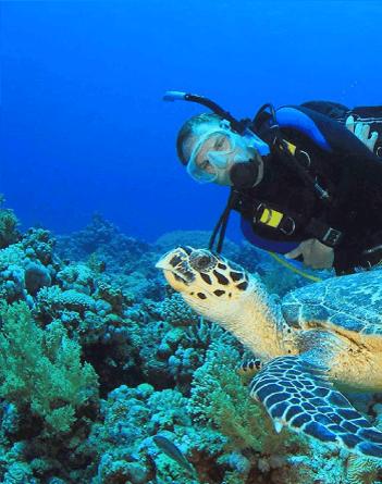 scuba-dive.png