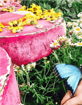 dubai-butterfly-garden.png