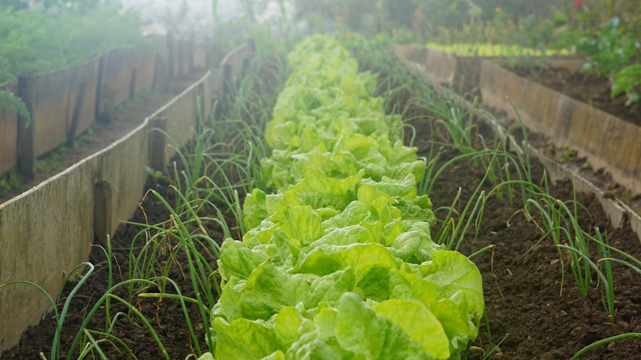 Farm to Families CSA -