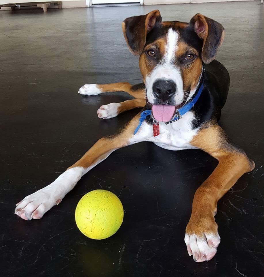 dog with bowl.jpg