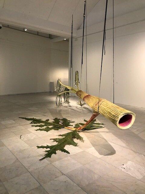 Installasjonsbilde fra  Flora mellom planter og mennesker  utstillingen i Stavanger Kunstmuseum. Ingela Ihrmans,  The Giant Hogweed.  Foto: Arnhild Sunnanå