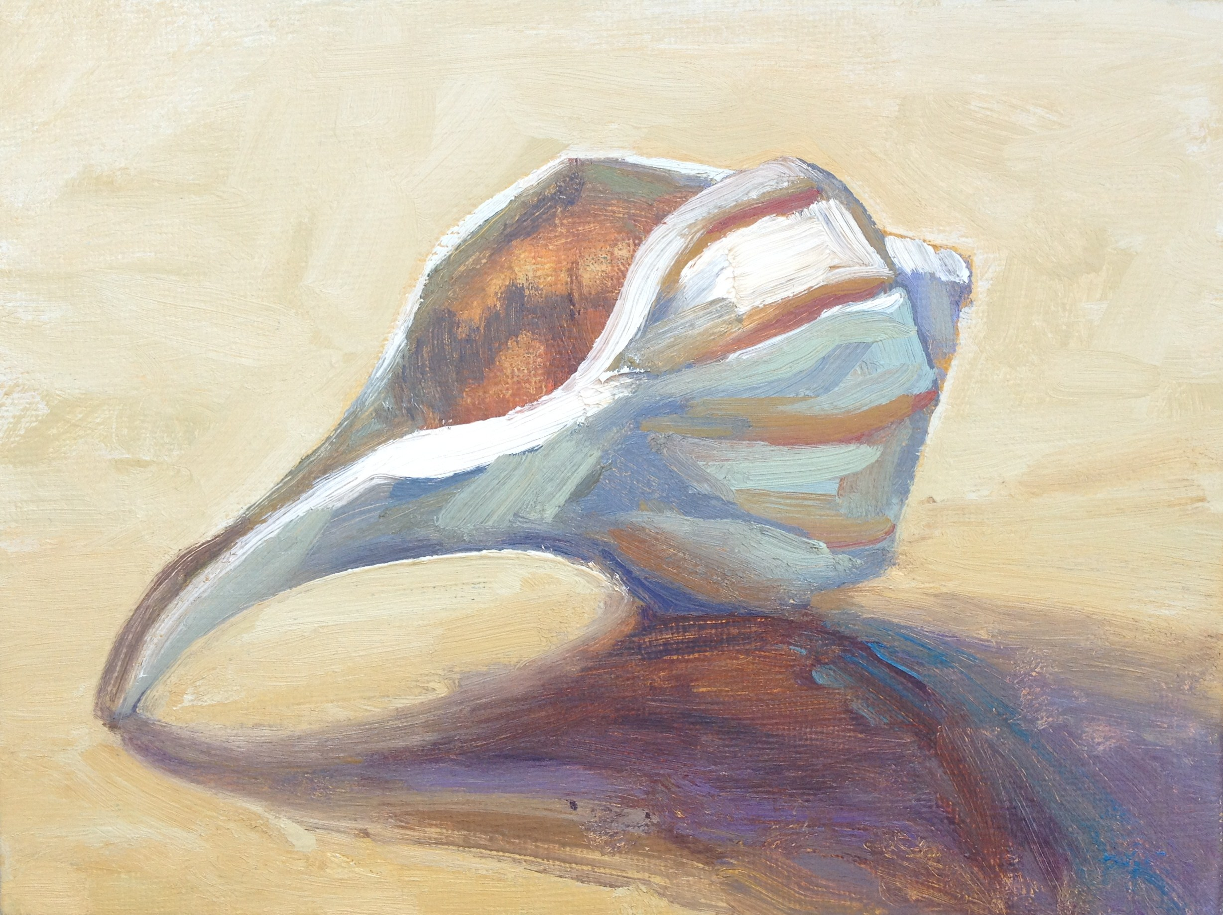 SEASHELLS BY THE SEASHORE - View Collection