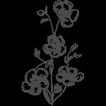 flax seed flowers illustration
