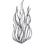 spirulina illustration