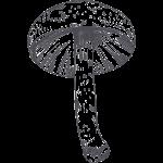 wild mushroom illustration