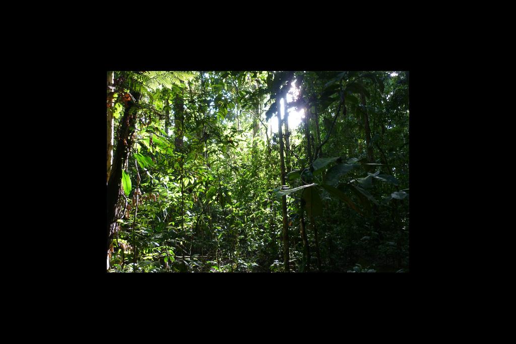 RainForest600x400.png