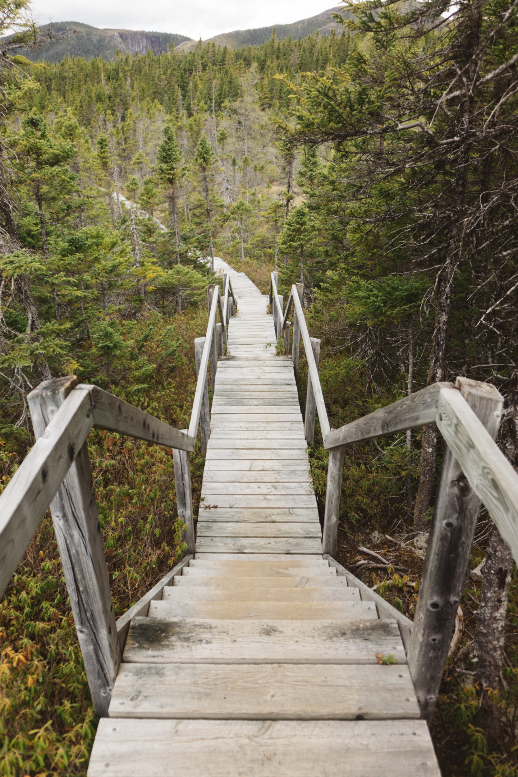 Stairs on Alexander Murray Trail