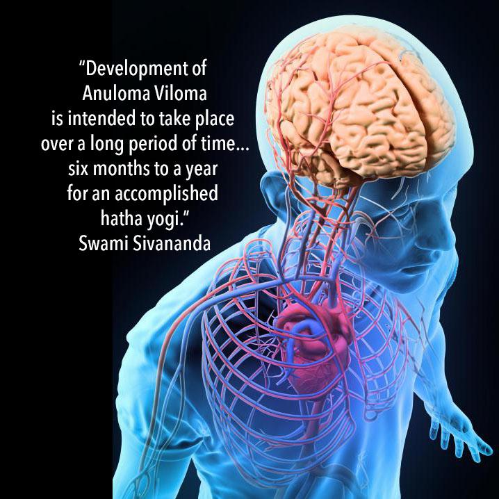 anterior-view-of-human-brain.jpg