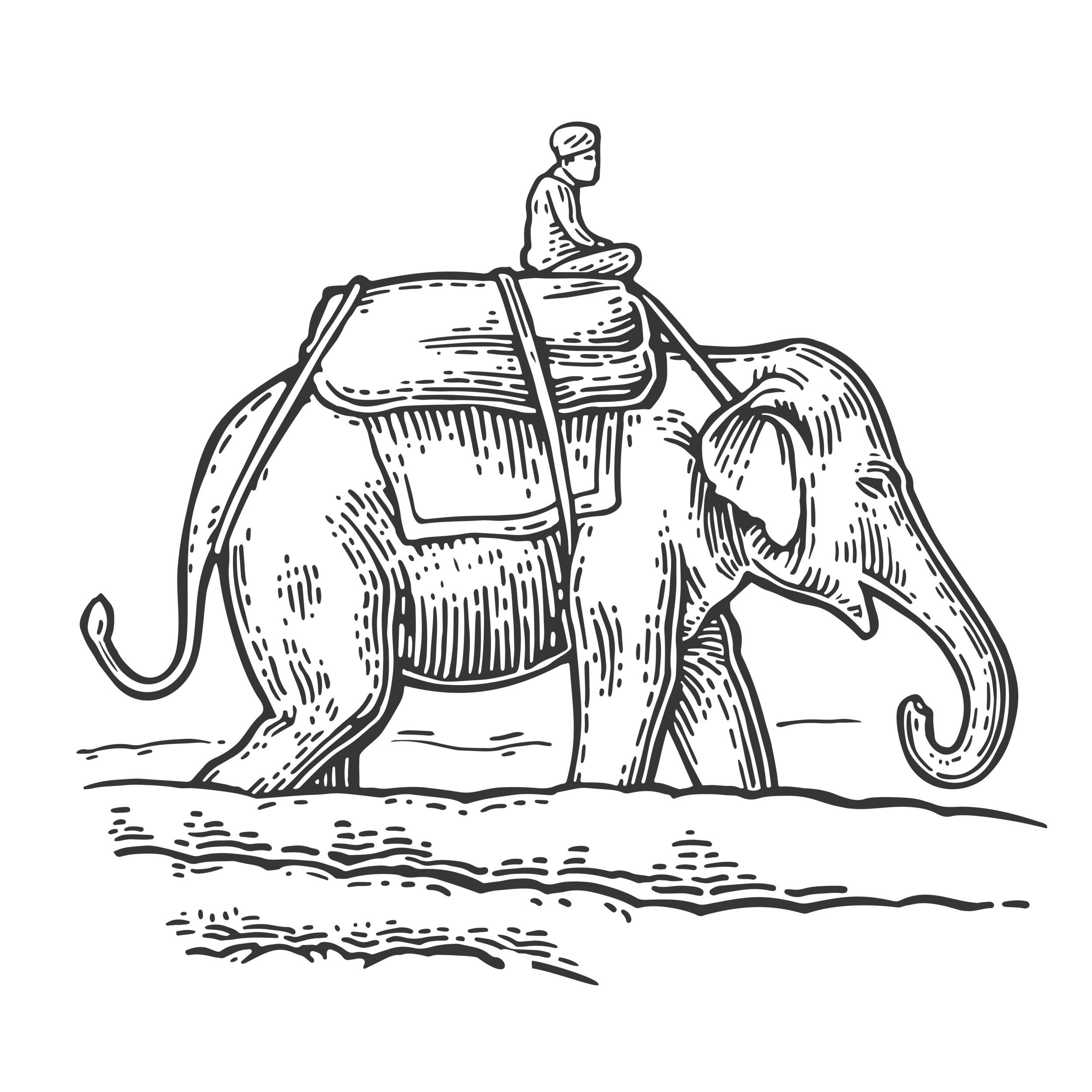 elephant and rider.jpg