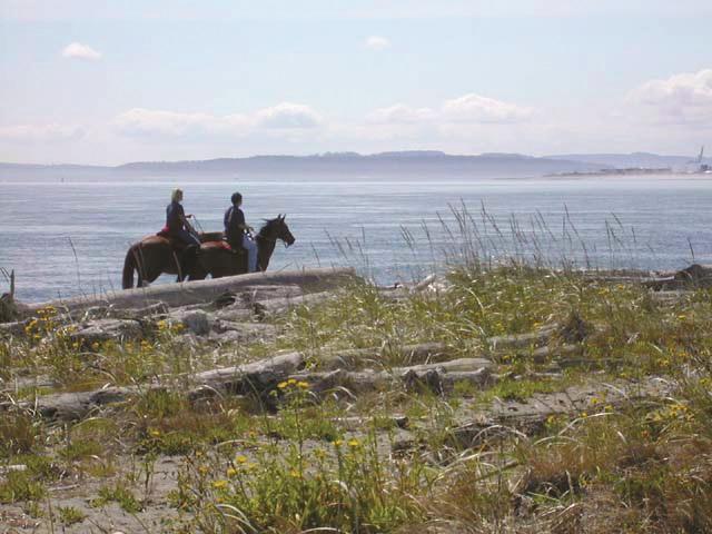 horses, beach, jefferson county