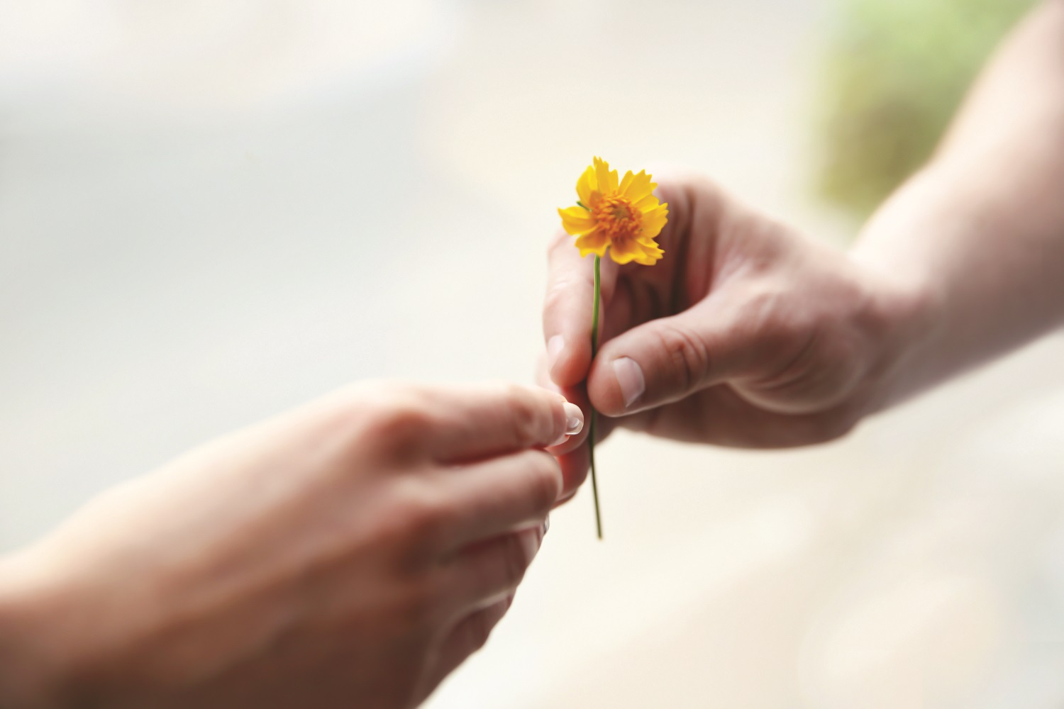 hands, flower, community foundation