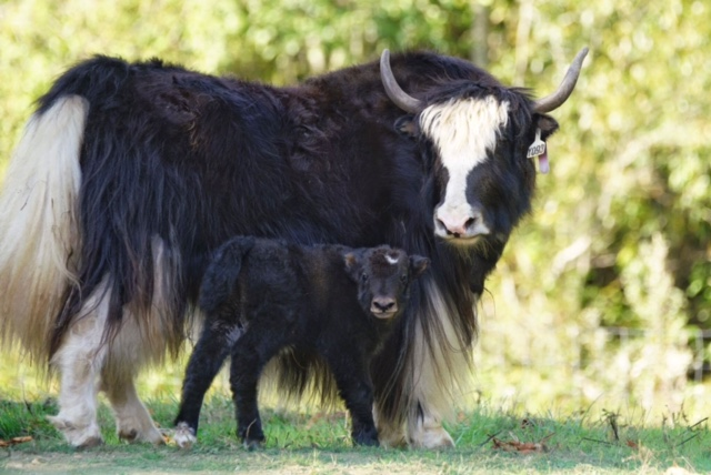 yak, designated fund, jefferson county