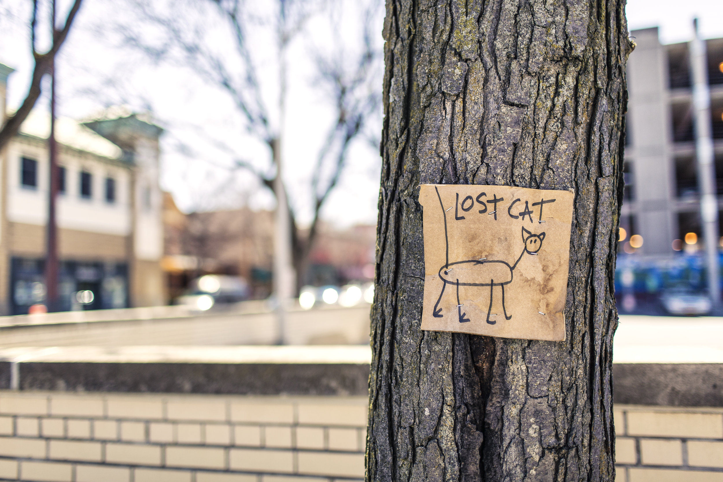 Tree trunk with lost cat poster