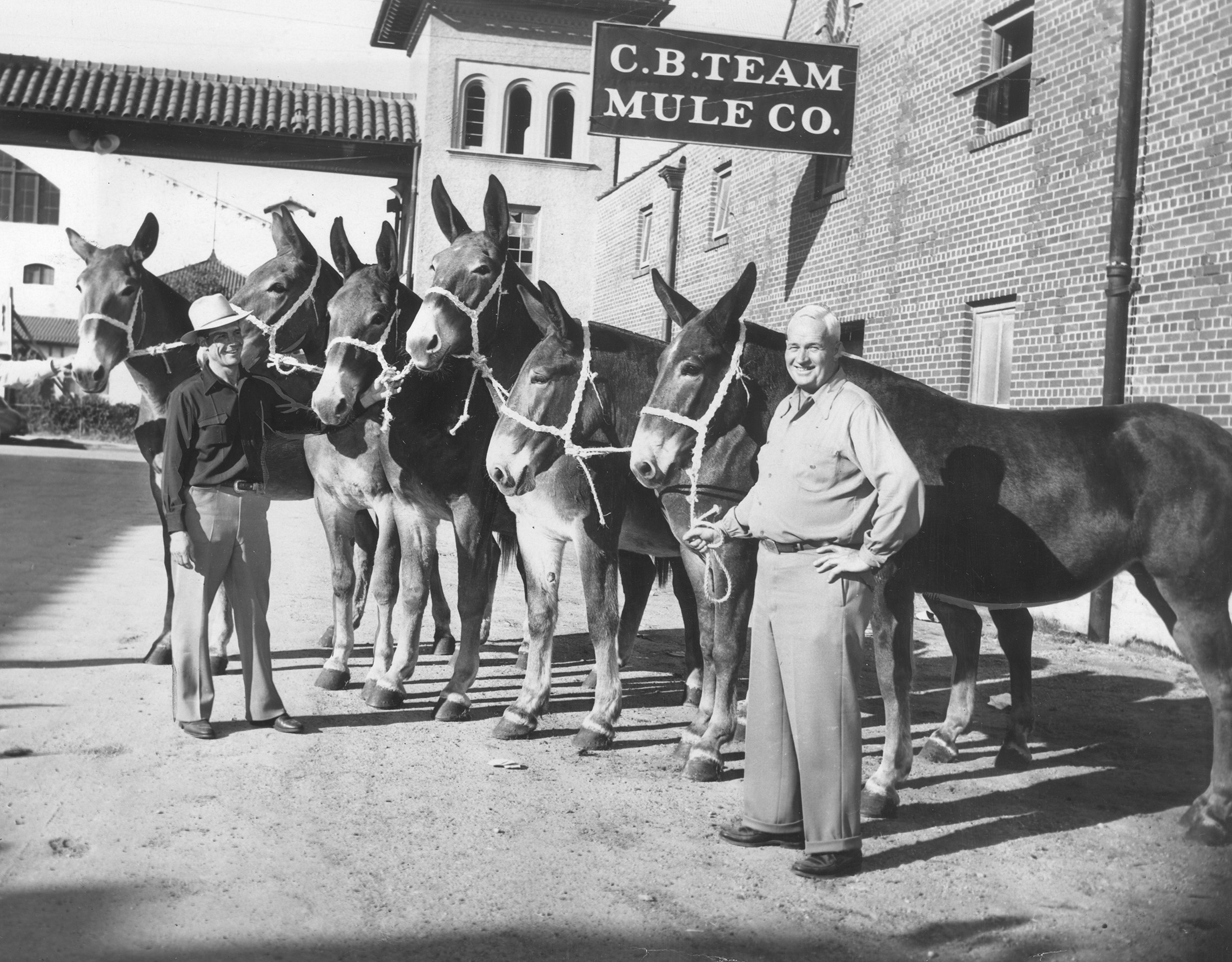C.B. Team Mule Co. in Mule Alley, Fort Worth Stockyards, Lester Hilton and Russel W. Crane, oct 21 1946.jpg