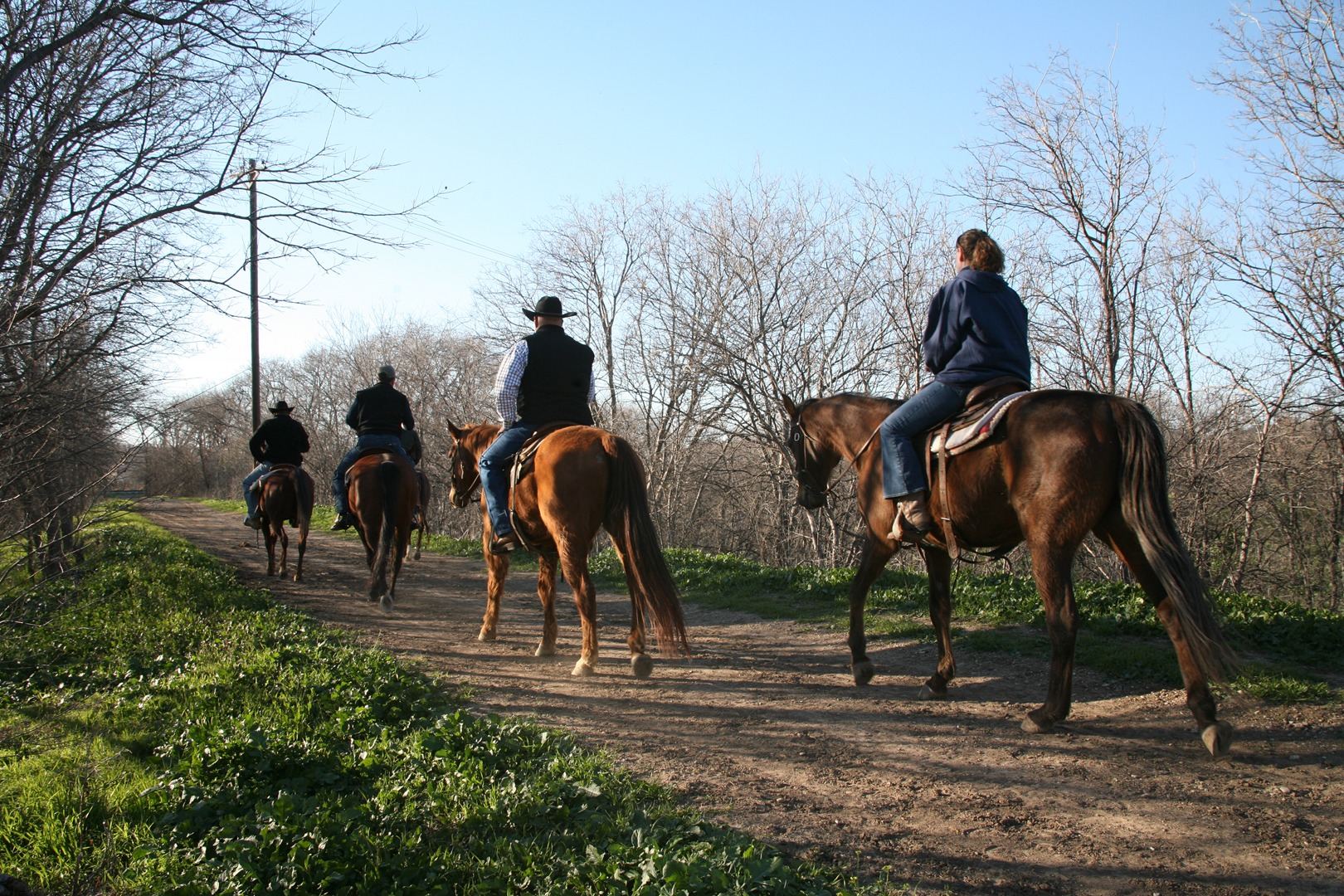 Stockyards stables and horseback riding -