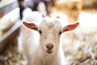 The PettinG corral -