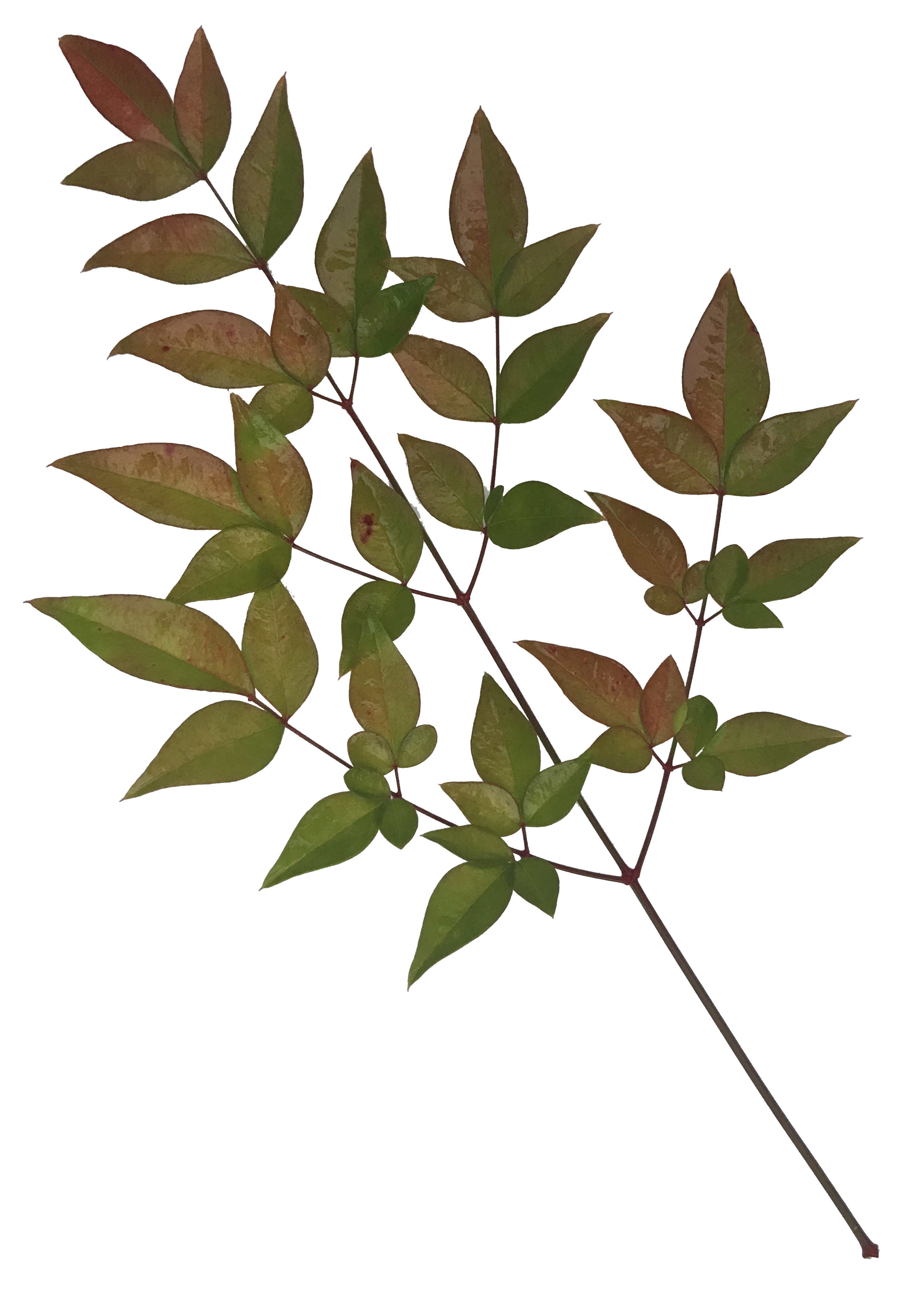 Leaves-1.png