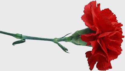 1524291406_flower-121.jpg