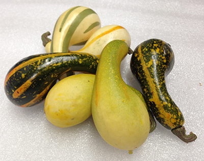 "Record Number: 022 Collection Date: 21 Oct 2017  Description: Six gourds, yellow, green, orange Dimension: approx 3.5"" x 1.5"" x 1.5"" ea"