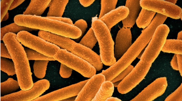 Many non-antibiotic drugs affect gut bacteria  A new study finds that more than 200 human-targeted, non-antibiotic drugs inhibit the growth of bacterial species... read more