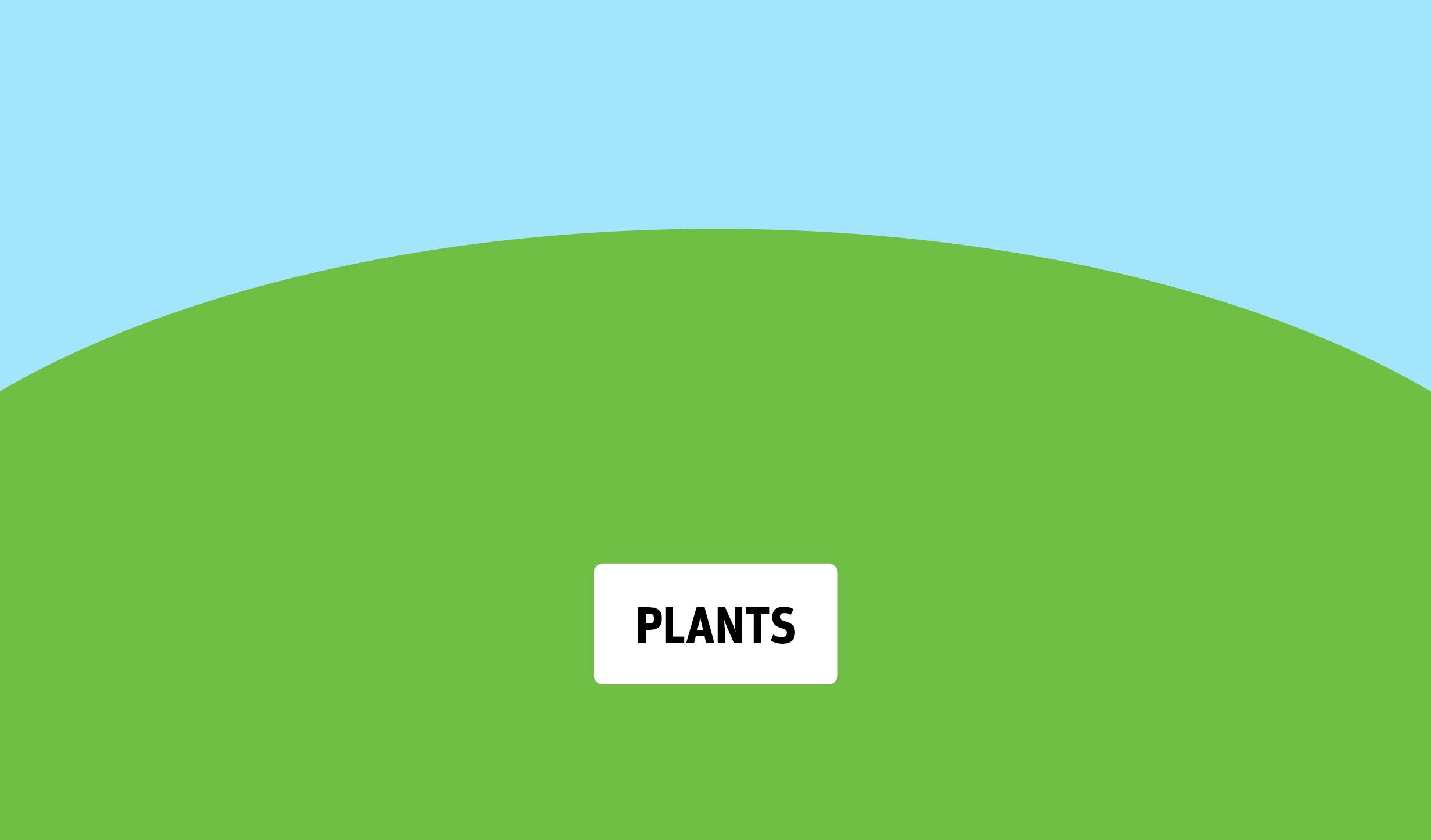 Plants example-01.jpg