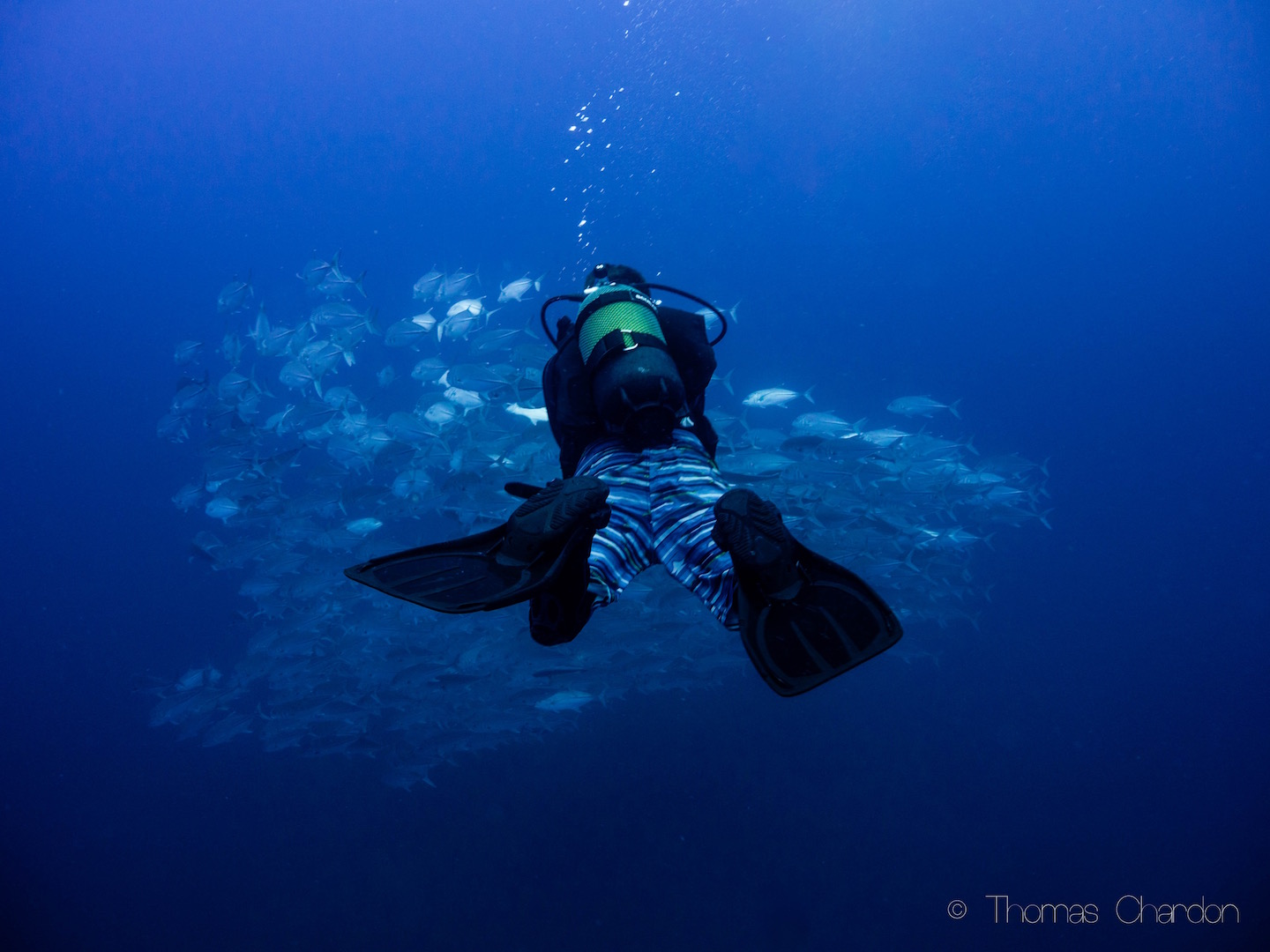 Diving in Mozambique, Tofo