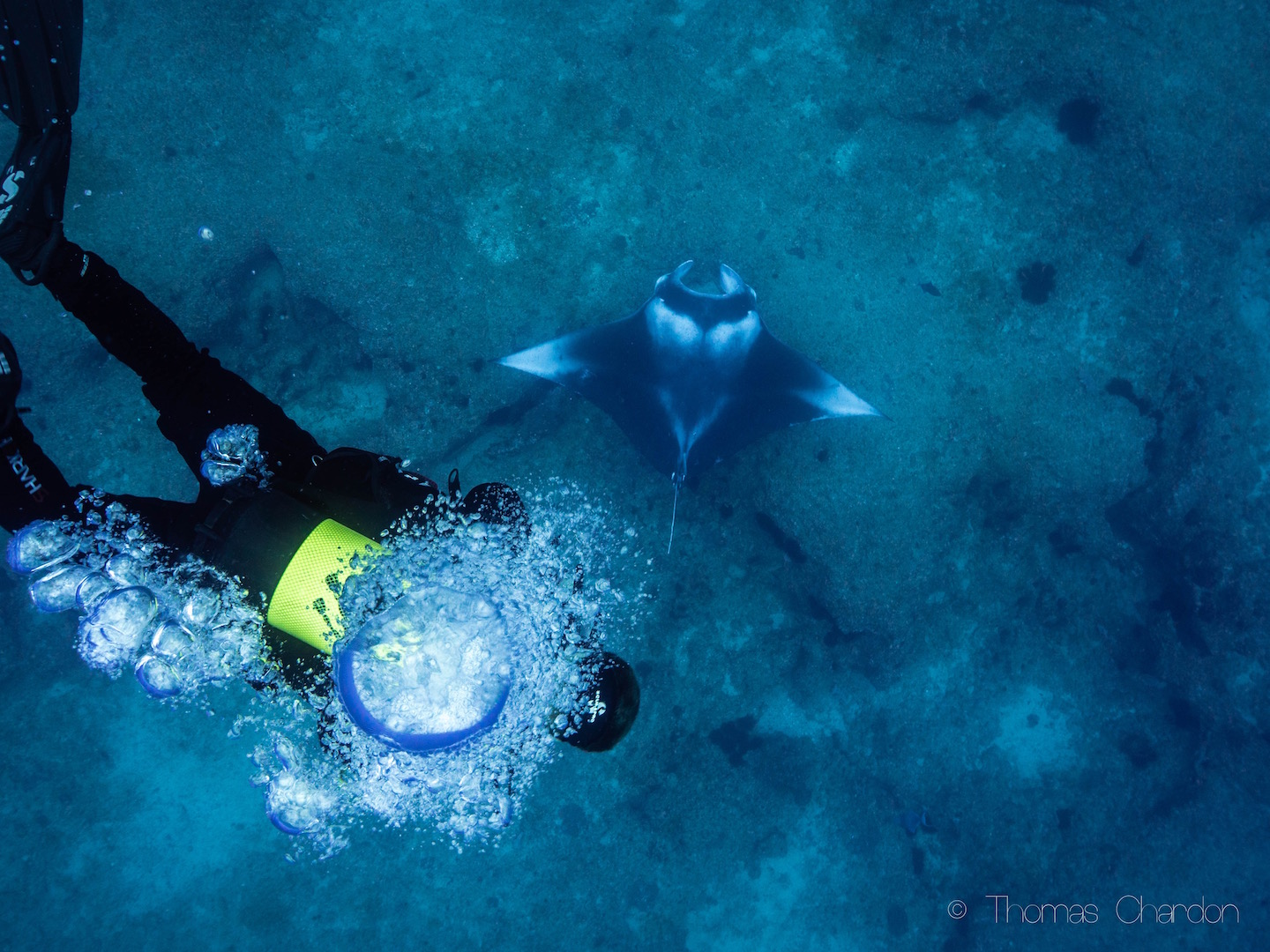 Diving with mantas in Mozambique