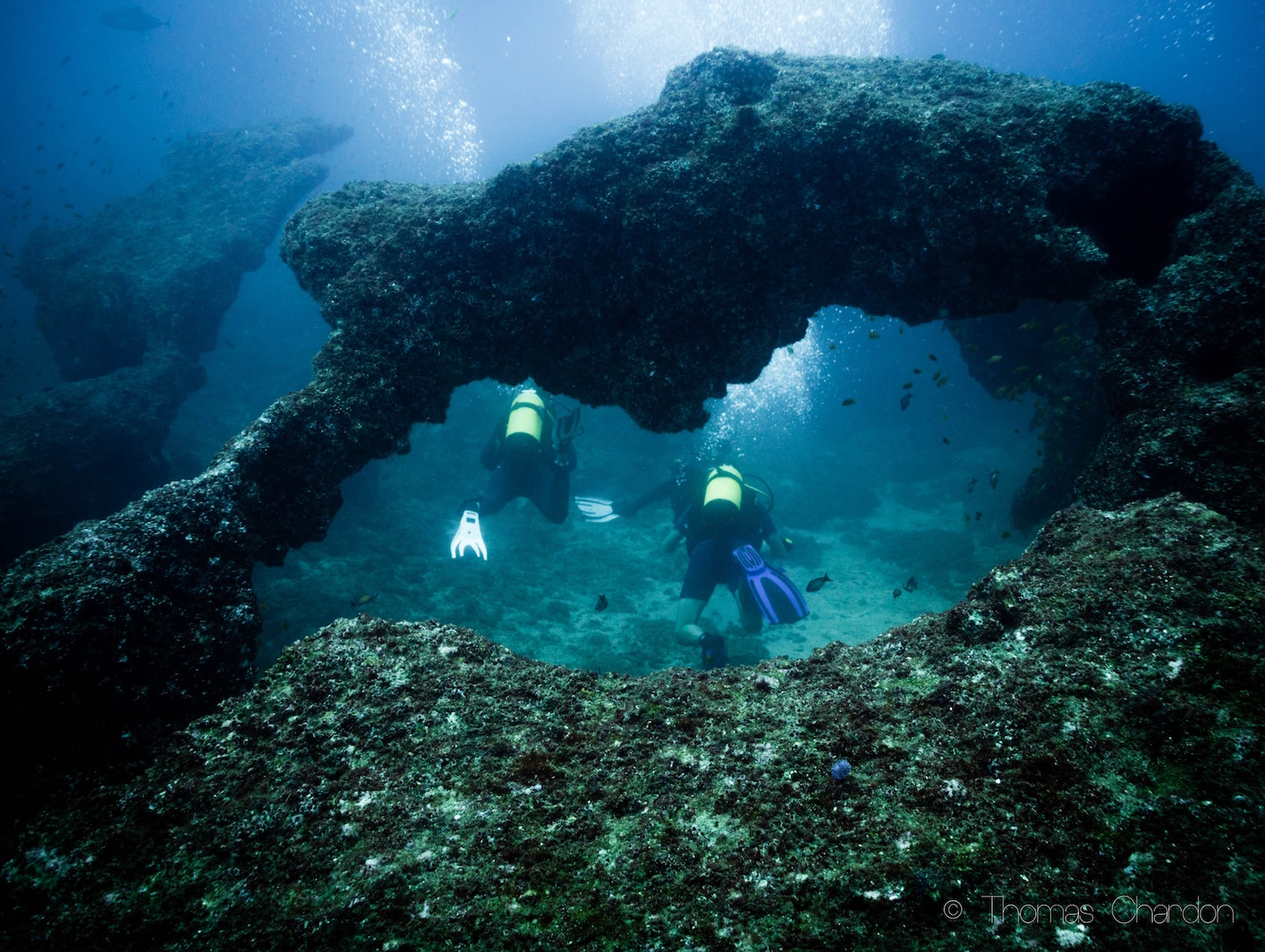 Tofo dive sites are beautiful