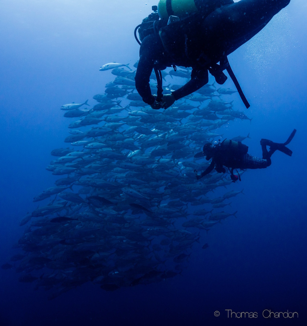Diving in Tofo with big schools of fish