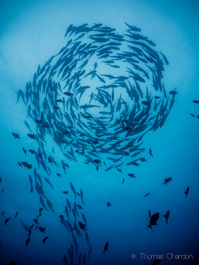Tofo Diving can be epic!