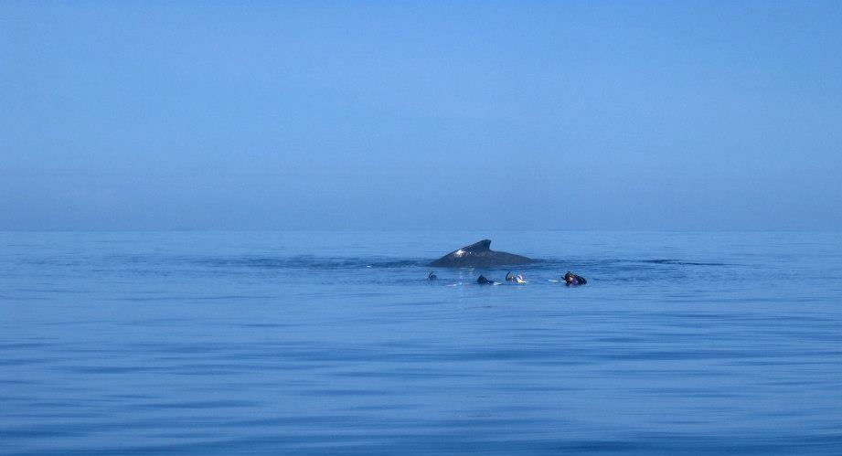 snorkler 3.jpg